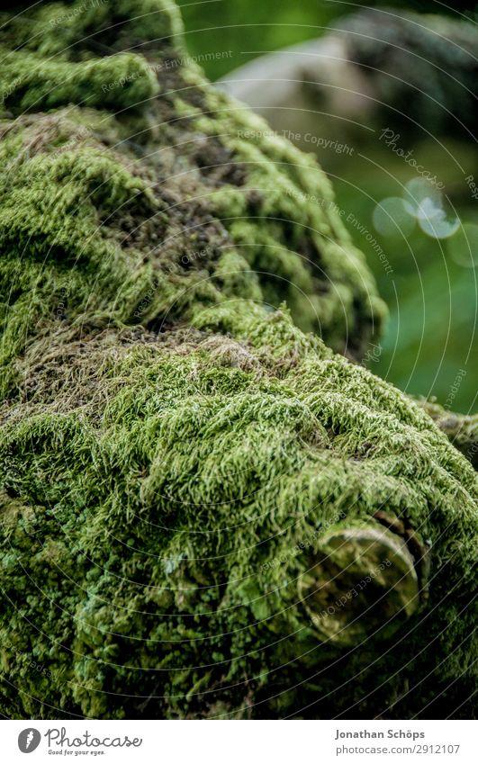 Moos an einem Baum Natur grün Landschaft wandern weich Nationalpark Baumrinde Schottland Großbritannien bewachsen Edinburgh Moosteppich