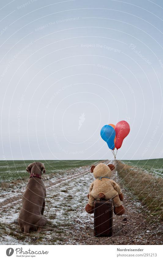 Ein Stück müssen wir noch.... Hund Ferien & Urlaub & Reisen Tier Winter Ferne Straße Wege & Pfade Freiheit Freundschaft Eis Feld warten Ausflug beobachten Frost Luftballon