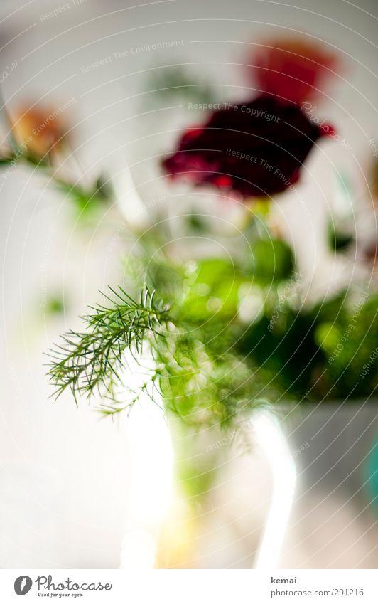 Grünzeuch inklusive Pflanze Blume Rose Blatt Blüte Grünpflanze Zweig Vase grün rot weiß Farbfoto Nahaufnahme Detailaufnahme Menschenleer Tag Licht Unschärfe