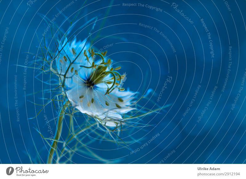 Jungfer im Grünen elegant Wellness harmonisch Wohlgefühl Zufriedenheit Erholung ruhig Meditation Spa Feste & Feiern Trauerfeier Beerdigung Natur Pflanze