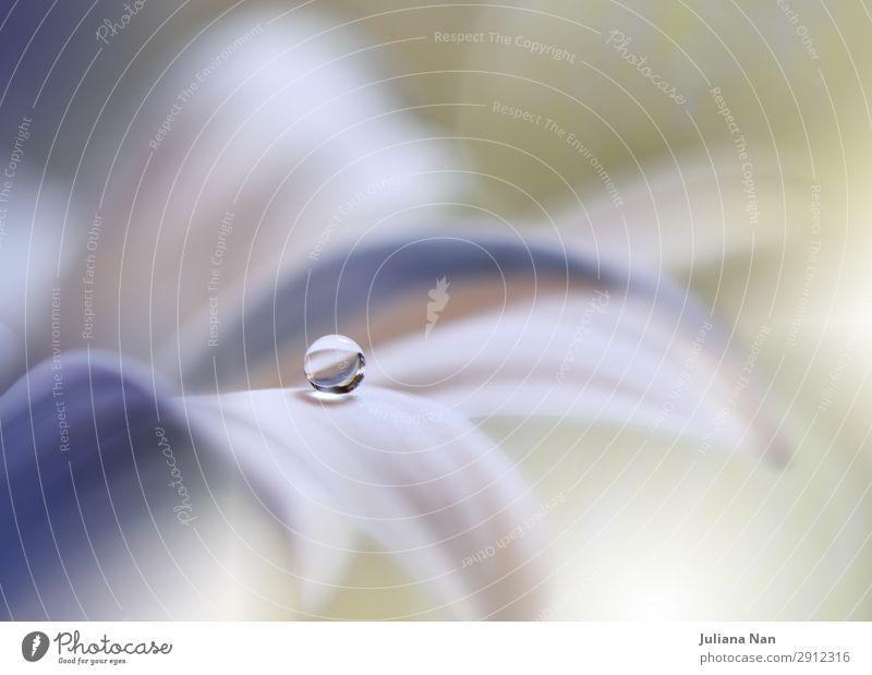 Schöne Natur Makrofotografie, Blumenkunst Design. Lifestyle elegant Stil Kunst Kunstwerk Umwelt Pflanze Wasser Wassertropfen Blüte Grünpflanze modern Sauberkeit