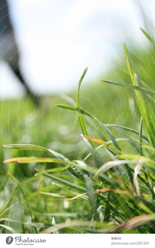 Nah und Fern Mensch Himmel grün Wiese Gras Beine Halm durcheinander