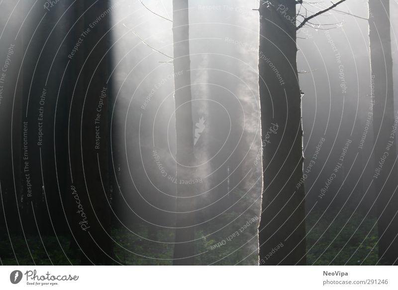 Rauchende Bäume Natur Landschaft Luft Wasser Herbst Klima Wetter Nebel Baum Wildpflanze Stamm Baumstamm Wald Forstwald Holz Nebelschleier Atem Sauerstoff atmen
