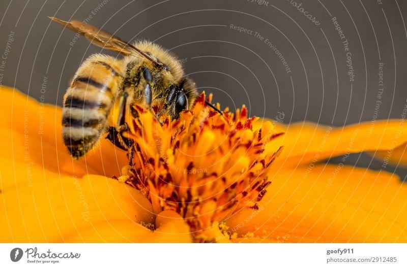 Arbeitstier Ausflug Expedition Sonne Umwelt Natur Pflanze Tier Sonnenlicht Frühling Sommer Schönes Wetter Blume Blüte Garten Park Wiese Nutztier Wildtier Biene