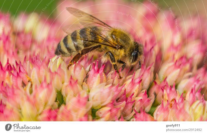 Auf ins Wochende Ausflug Expedition Sommer Umwelt Natur Pflanze Tier Frühling Blume Blüte Garten Park Wiese Nutztier Wildtier Biene Tiergesicht Flügel Fell 1