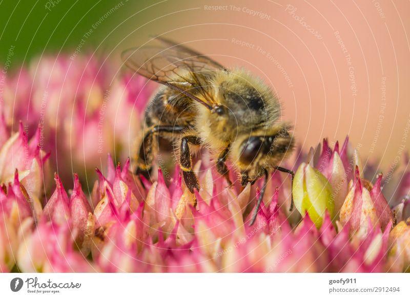 Harte Arbeit elegant Ausflug Abenteuer Expedition Sommer Umwelt Natur Pflanze Tier Sonnenlicht Frühling Blume Blüte Garten Park Wiese Nutztier Wildtier Biene