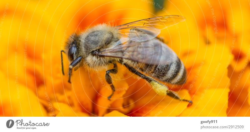Fleißiges Bienchen II Natur Sommer Pflanze Blume Tier Umwelt Blüte Frühling Wiese Garten Arbeit & Erwerbstätigkeit Ausflug Park Wildtier Abenteuer Blühend