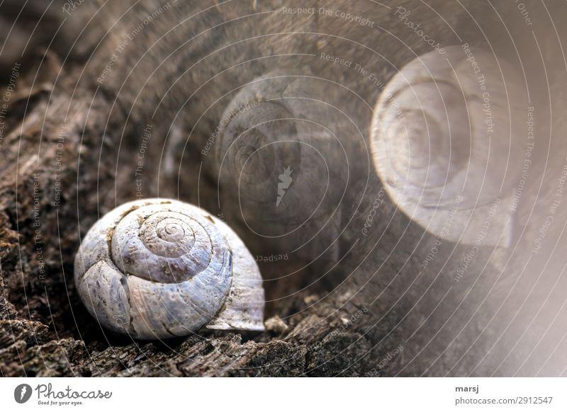 Die Traumwelt der alten Schnecke Tier Totes Tier Schneckenhaus 1 Holz Spirale liegen außergewöhnlich dunkel gruselig kalt natürlich Sorge Trauer Tod träumen