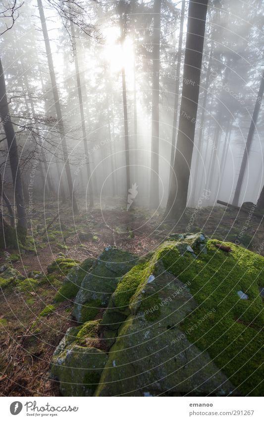 Zauberwald Ferien & Urlaub & Reisen Ausflug Berge u. Gebirge wandern Natur Landschaft Pflanze Luft Wasser Wolken Sonne Klima Wetter Nebel Baum Hügel Felsen hell