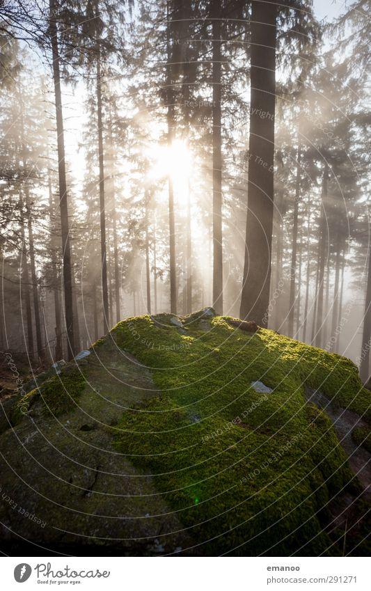 Der Fels im Zauberwald Ferien & Urlaub & Reisen Berge u. Gebirge wandern Natur Landschaft Pflanze Luft Wasser Wolken Sonne Wetter Nebel Baum Moos Wald Felsen