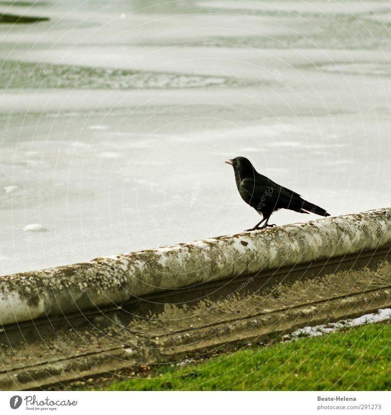 Wenn jetzt Sommer wär' .... grün Wasser weiß Einsamkeit Winter schwarz Umwelt kalt Mauer Schwimmen & Baden Stimmung Vogel Eis Park warten