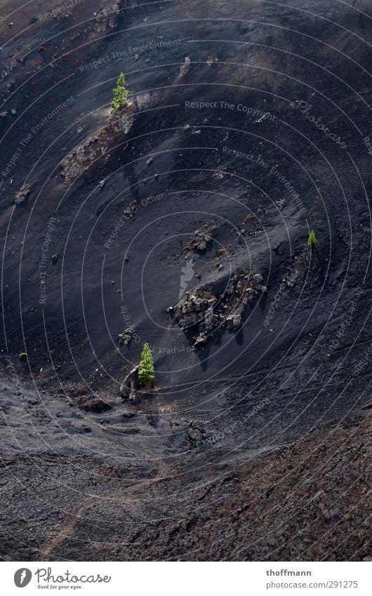 La Palma Lava Tanne Berge u. Gebirge Stein schwarz grün Ferien & Urlaub & Reisen Reisefotografie Rucksack Kanaren Insel Europa laufen Klettern Bergsteigen Kies