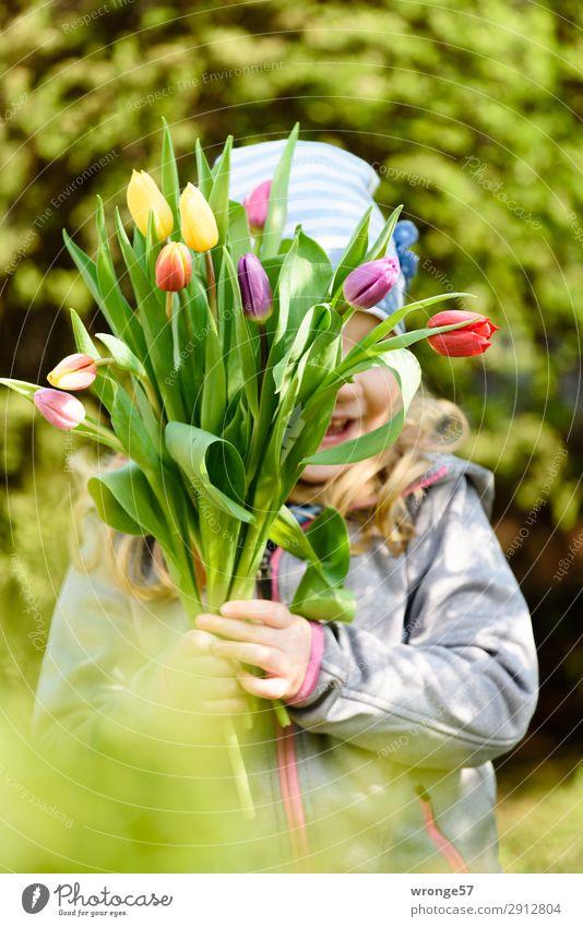 Blümchen zum Muttertag Mensch Kind Mädchen 1 3-8 Jahre Kindheit Blume Tulpe mehrfarbig Freude Glück Fröhlichkeit Frühlingsgefühle Blumenstrauß Tulpenblüte