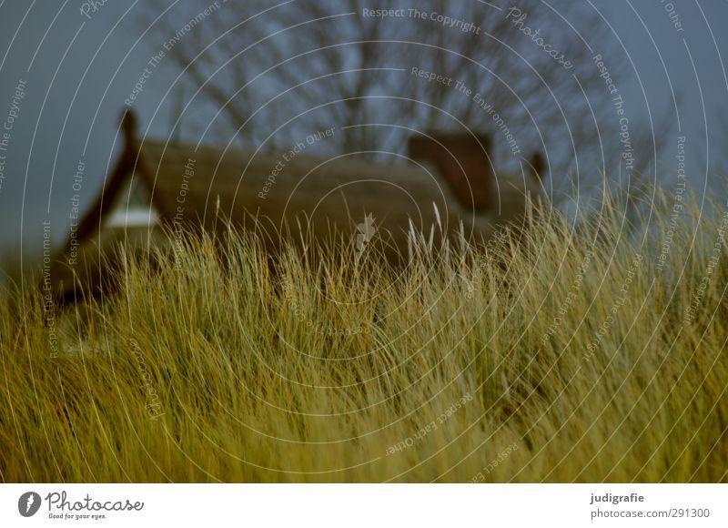Darß Ferien & Urlaub & Reisen Häusliches Leben Haus Umwelt Natur Pflanze Gras Küste Ostsee Hütte Dach natürlich Wärme Stimmung Idylle ruhig Düne Stranddüne