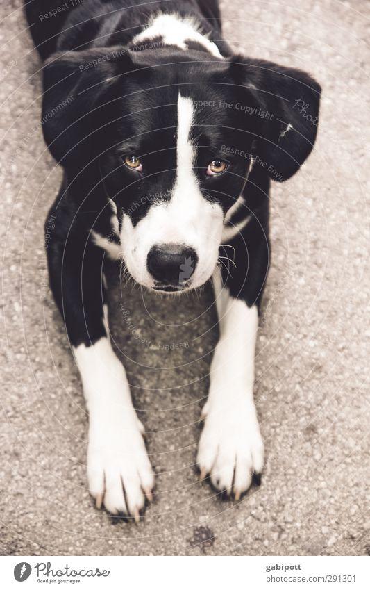 Wer kann dazu schon Nein sagen Hund weiß Tier schwarz Gefühle braun Freundschaft liegen Zufriedenheit Warmherzigkeit niedlich weich beobachten Wunsch Vertrauen