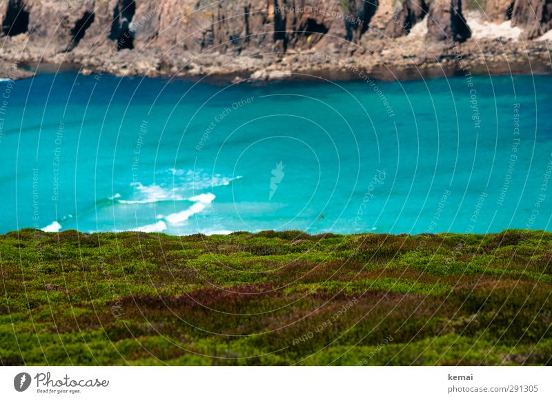 Flora schaut aufs Meer Natur blau Ferien & Urlaub & Reisen grün Wasser Sommer Pflanze Landschaft Umwelt Küste Felsen Wellen Wachstum Insel Schönes Wetter