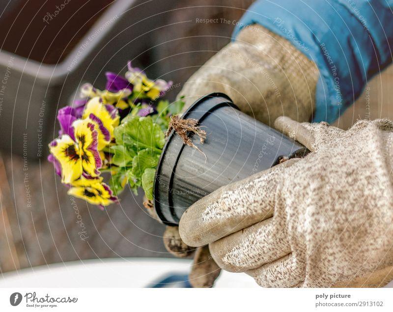 Primel wird gepflanzt Wellness Freizeit & Hobby Ferien & Urlaub & Reisen Umwelt Natur Klimawandel Blatt Blüte Grünpflanze Topfpflanze Umweltverschmutzung