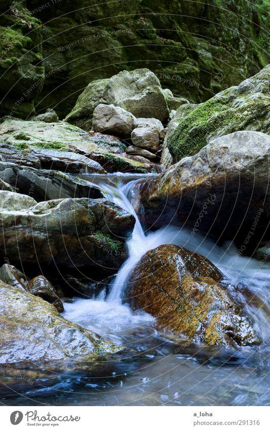 to go with the flow Umwelt Natur Urelemente Wasser Sommer Moos Felsen Alpen Berge u. Gebirge Schlucht Bach Fluss Wasserfall Stein eckig Flüssigkeit nass