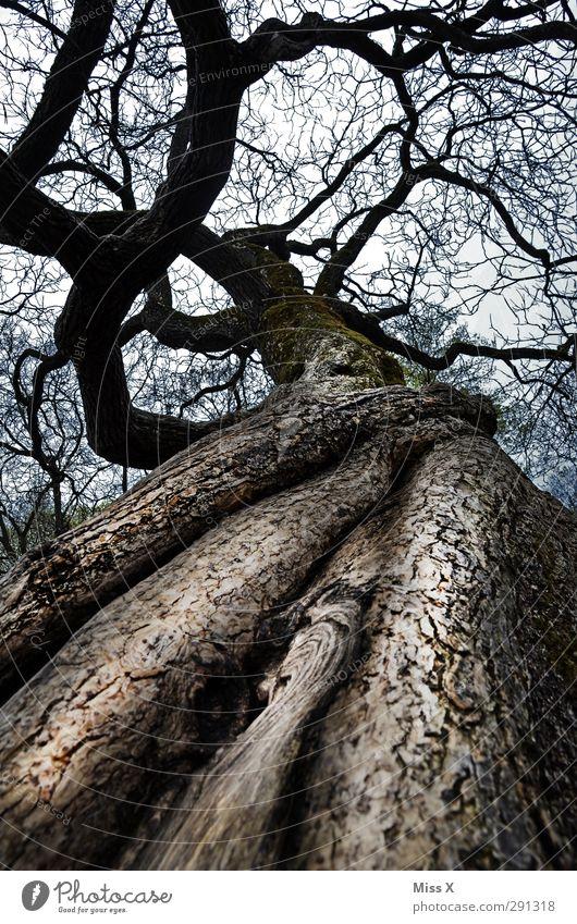 weibliches Holz Erde Winter Baum feminin Ast Zweig Scheide Baumstamm Wurzel Baumrinde alt Schamlippen Farbfoto Gedeckte Farben Außenaufnahme Menschenleer