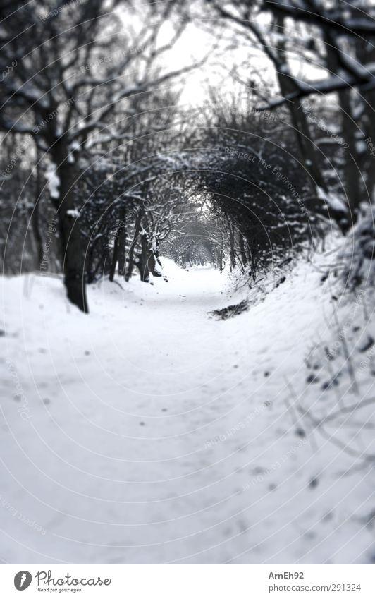 Schneetunnel Natur Baum Winter Wald kalt Sträucher
