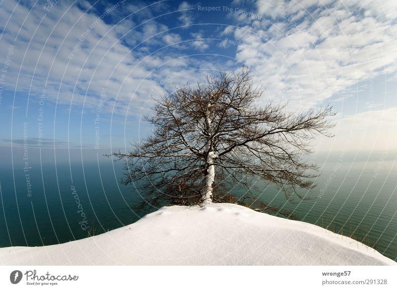 Baum am Kliff Natur Landschaft Pflanze Erde Luft Wasser Himmel Wolken Horizont Winter Schönes Wetter Schnee Küste Ostsee Kreidefelsen Felsvorsprung Deutschland