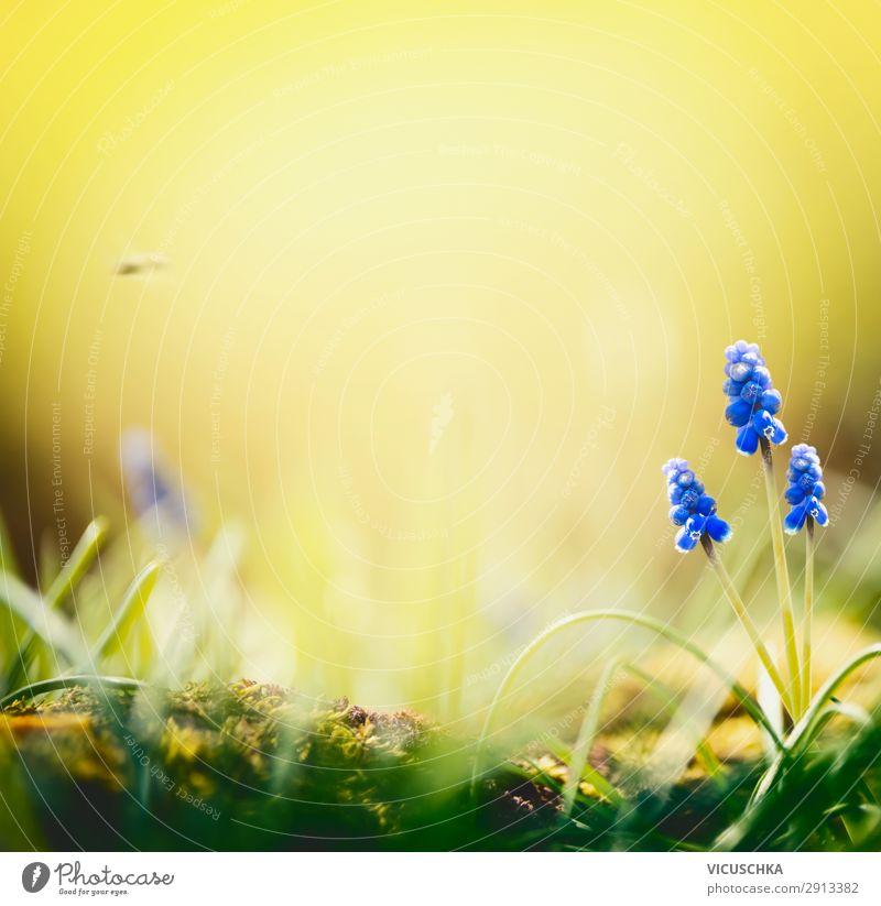 Frühlings Natur Hintergrund mit Hyazinthen Blumen Sommer Pflanze blau Landschaft Freude Hintergrundbild Lifestyle gelb Garten wild