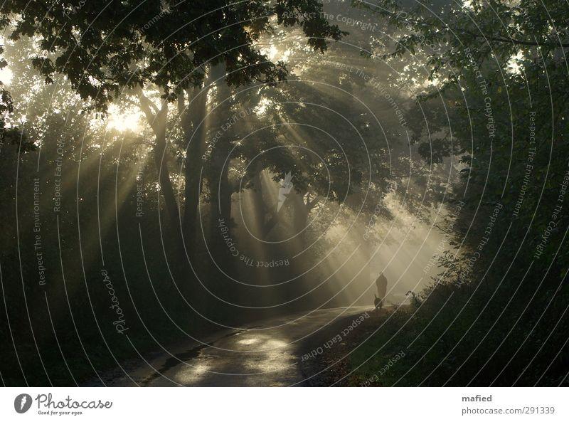 Weg ins Licht Frau Erwachsene Natur Sonne Winter Schönes Wetter Nebel Baum Sträucher Wald Hund gehen wandern braun gelb gold grün schwarz Gelassenheit ruhig