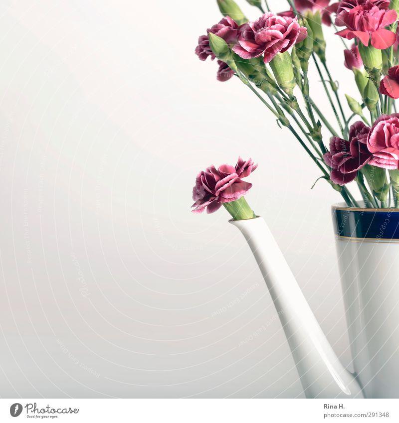 KaffeeErsatz Blume Stil Kunst Blühend Blumenstrauß Quadrat Stillleben Vase Geschirr Nelkengewächse Wiesenblume Kaffeekanne