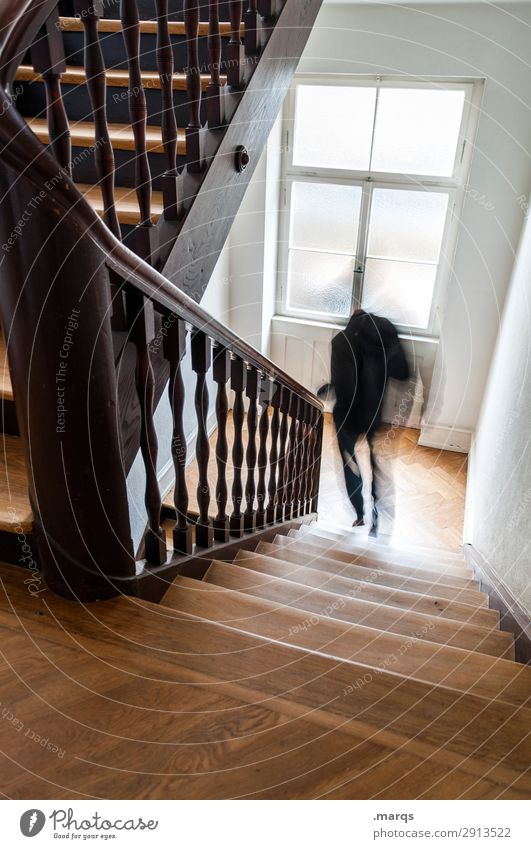 Arbeiten gehen Mann Erwachsene 1 Mensch Treppe Treppenhaus rennen Geschwindigkeit Bewegung Stress Farbfoto Innenaufnahme Textfreiraum unten Bewegungsunschärfe