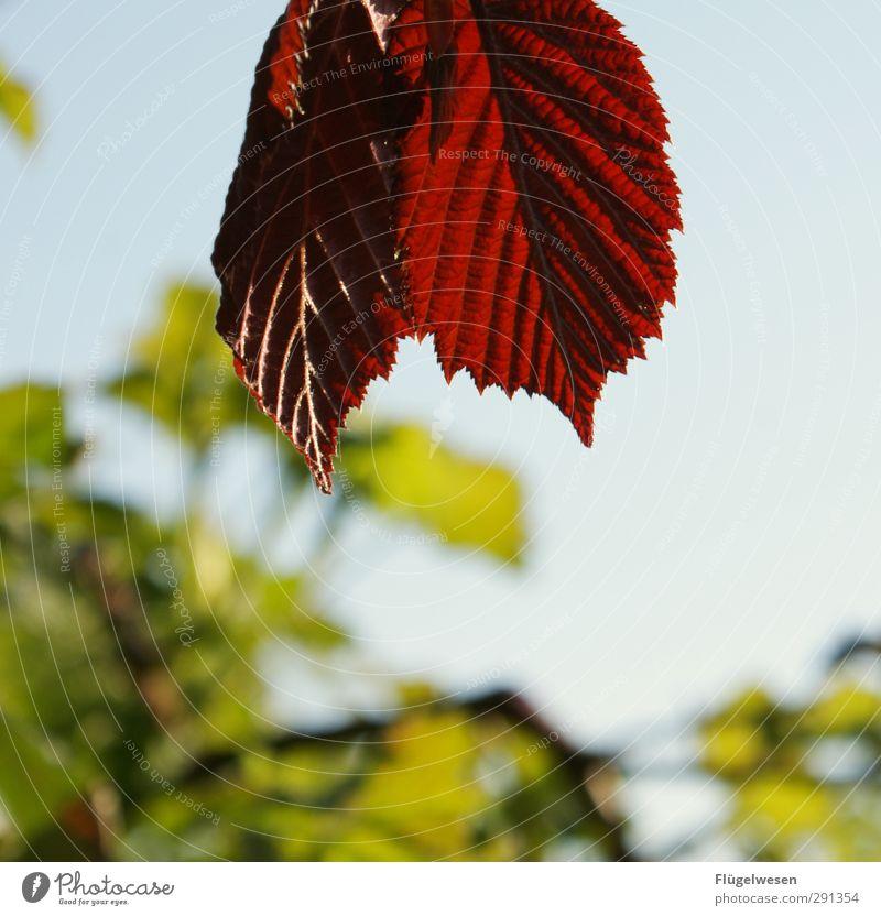 Die letzten Überlebenden... Umwelt Natur Landschaft Frühling Sommer Herbst Klima Klimawandel Wetter Pflanze Baum Blatt Blüte Grünpflanze Garten Park atmen eckig