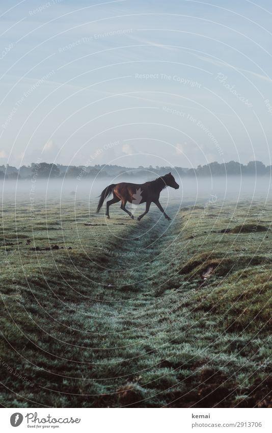 Pferd kreuzt von links Himmel Natur grün Erholung Tier ruhig Leben Herbst Gras Freiheit braun Ausflug Zufriedenheit Freizeit & Hobby frei frisch