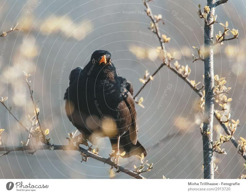 Von der Amsel beobachtet Natur grün Baum Tier Blatt schwarz gelb Auge Blüte natürlich orange Vogel glänzend Wildtier Feder Schönes Wetter