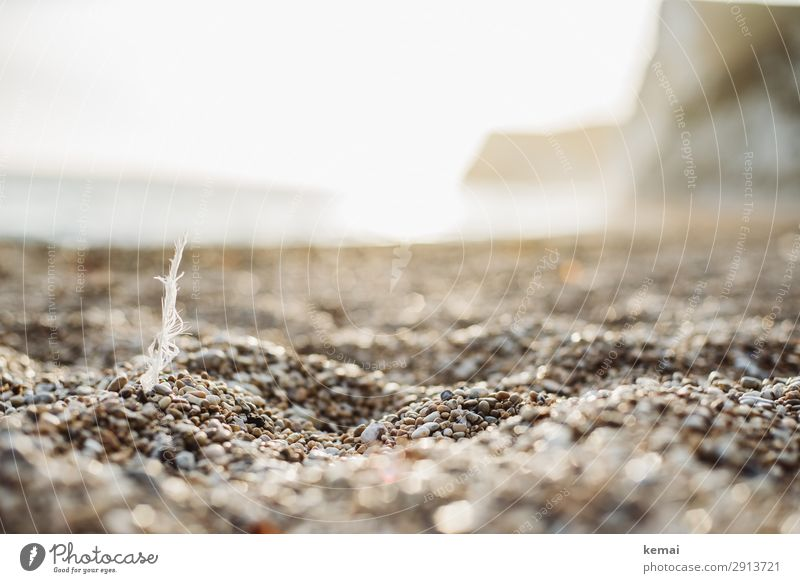 Feder am Strand harmonisch Wohlgefühl Zufriedenheit Sinnesorgane Erholung ruhig Freizeit & Hobby Ferien & Urlaub & Reisen Ausflug Abenteuer Freiheit Natur