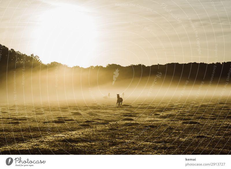 Wildes Pferd am frühen Morgen Leben harmonisch Wohlgefühl Zufriedenheit Sinnesorgane Freizeit & Hobby Ausflug Abenteuer Freiheit Mensch 2 Natur Landschaft Tier