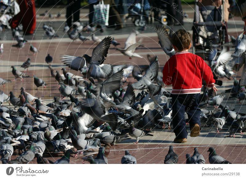 Ab durch die Mitte Kind Spielen Vogel rennen Europa Platz Taube