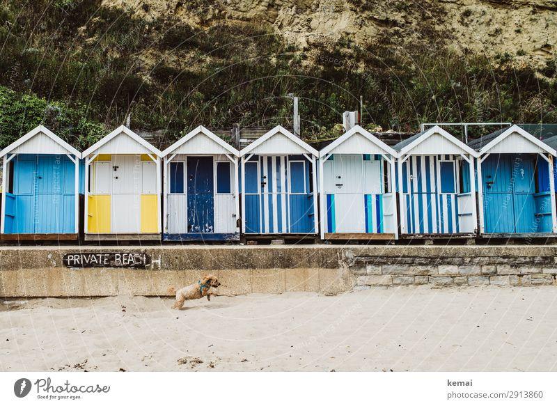 Privatstrand Hund blau Tier Freude Strand Lifestyle gelb Frühling Glück Spielen Sand Ausflug Freizeit & Hobby Idylle Fröhlichkeit Lebensfreude