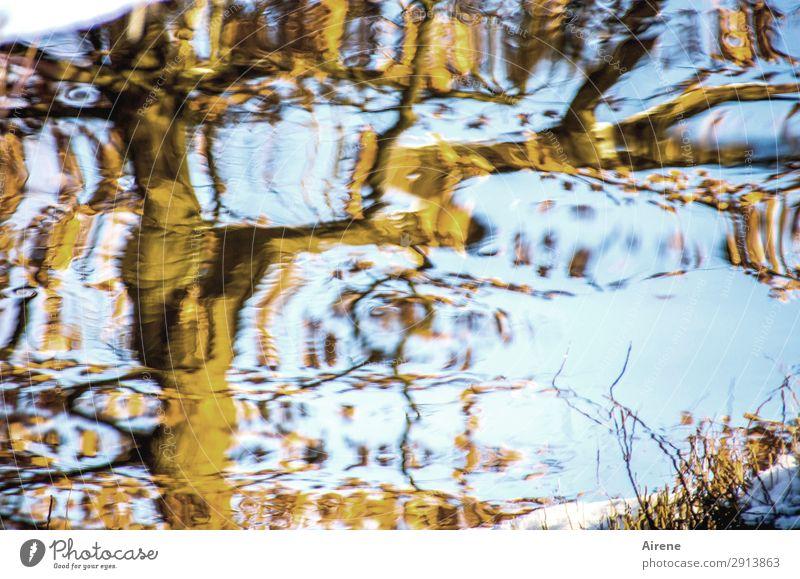 Vexierbild Himmel blau Wasser Baum Winter Leben Bewegung außergewöhnlich braun Kreativität Schönes Wetter fantastisch Urelemente Irritation Teich