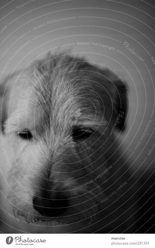 Philosoph Tier Haustier Hund 1 Denken träumen Traurigkeit Ferne Gefühle Tierliebe Romantik Müdigkeit Enttäuschung Sorge Stimmung Umwelt Umweltverschmutzung