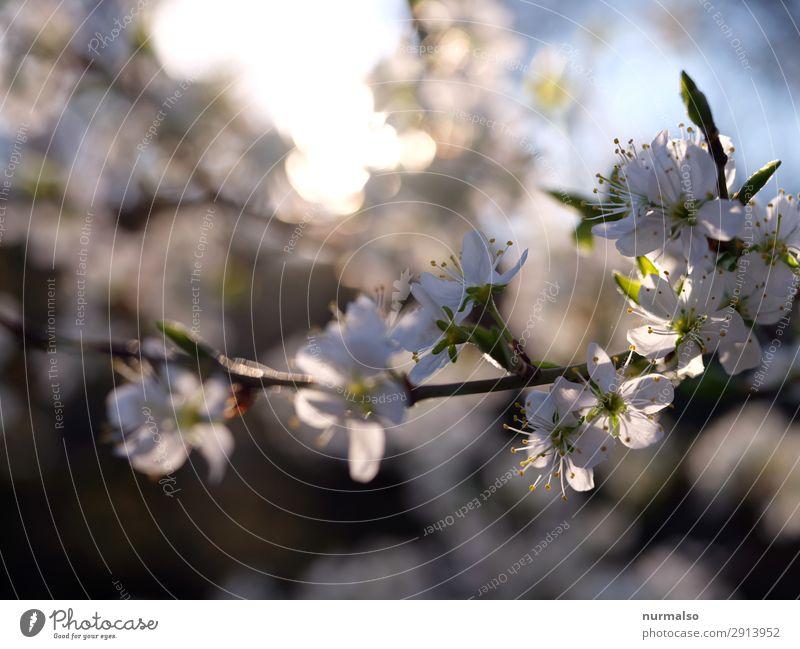 zlütenbauber Lifestyle Häusliches Leben Traumhaus Garten Hausbau Kunst Natur Klima Klimawandel Wetter Schönes Wetter Baum Blume Park genießen Küssen Liebe