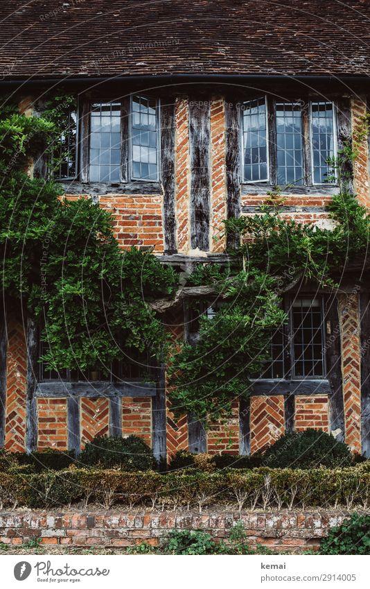 Alte Hausfront Ausflug Häusliches Leben Efeu Grünpflanze England Dorf Stadtzentrum Altstadt Fachwerkhaus Fachwerkfassade Mauer Wand Fenster Dach Wachstum