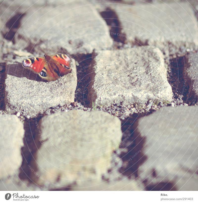 Aufbruch. Umwelt Natur Tier Frühling Schmetterling 1 Stein fliegen krabbeln leuchten sitzen frei Unendlichkeit schön nah natürlich niedlich mehrfarbig Glück