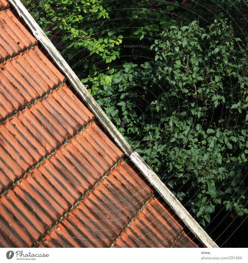 Gepflegter Abgang alt grün Baum rot Blatt Haus Wald Stimmung natürlich Zufriedenheit authentisch Ordnung Schönes Wetter Dach Sicherheit Ast
