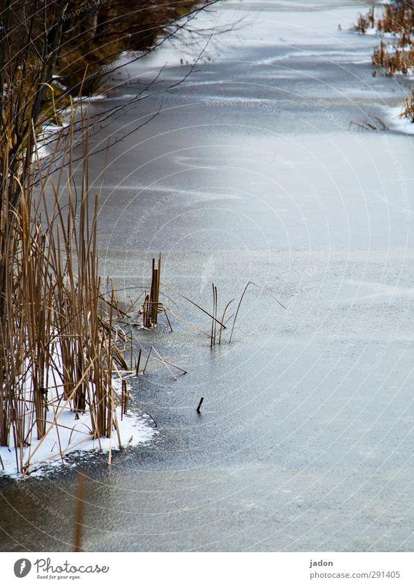 eiskalt. Wasser Winter Landschaft kalt Schnee Eis Frost Fluss Schilfrohr frieren Bach Wassergraben Eisfläche