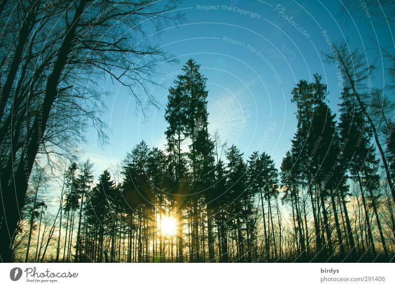 Winter Wald und Sonne Natur Himmel Sonnenlicht Schönes Wetter Baum leuchten Freundlichkeit Originalität Perspektive Mischwald Blauer Himmel Gegenlicht Nadelbaum