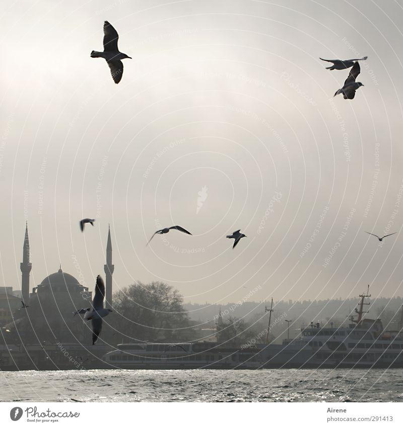 morgens am Bosporus Himmel Stadt Meer Tier Winter schwarz Ferne Bewegung grau Freiheit Küste Gebäude Vogel fliegen Nebel elegant