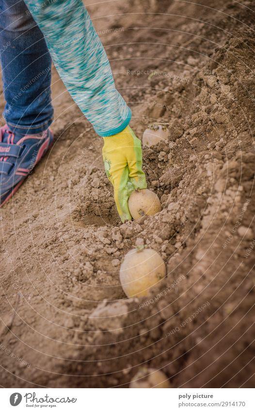 Kinderhand gräbt eine Kartoffel ein Natur Jugendliche Sommer Hand Mädchen Lifestyle Leben Umwelt Frühling Familie & Verwandtschaft Junge Zufriedenheit