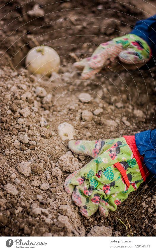 Kinderhand mit Handschuhe gräbt eine Kartoffel ein Mensch Natur Jugendliche Sommer Pflanze Leben Umwelt Frühling Garten Sand Erde Wachstum Kindheit Beginn