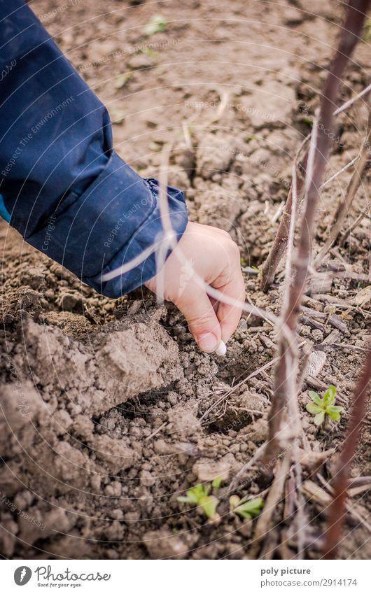 Kind steckt Bohnen-Samen in den Boden Natur Jugendliche Sommer Pflanze Lifestyle Leben Umwelt Frühling Junge Zeit Freizeit & Hobby Kindheit Zukunft