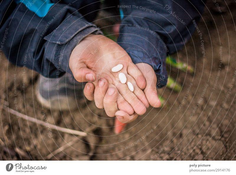 Kind hällt Bohnen-Samen in der Hand Mensch Natur Jugendliche Lifestyle Leben Umwelt Frühling Junge Spielen Zufriedenheit Freizeit & Hobby Erde Wachstum Kindheit