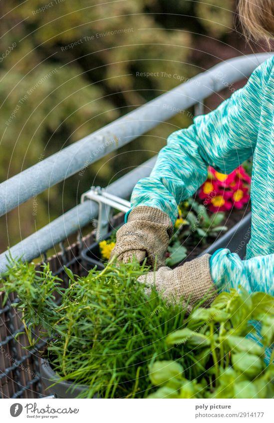 Frühlingserwachen auf dem Balkon Mensch Natur Jugendliche Junge Frau Sommer Mädchen Lifestyle Leben Umwelt Blüte Zufriedenheit Freizeit & Hobby 13-18 Jahre